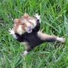 evil_hamster